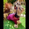 Lila Thermo kutyakabát 8XL méretben
