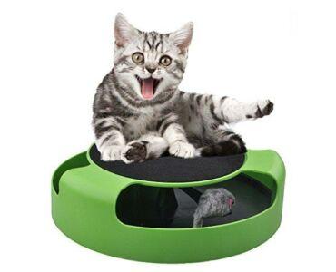 Macska játék mozgó egérrel.- Egérfogás