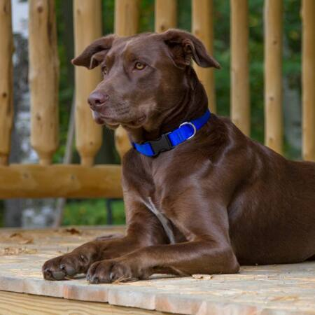 BPS Kutya nyakörv műanyag csattal S-es kék színben