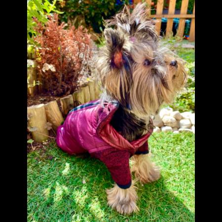 Lila Thermo kutyakabát XL méretben
